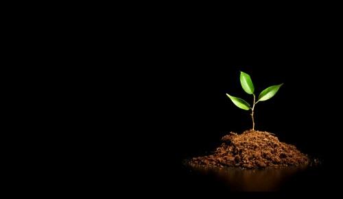 Spiritual Growth: Does The Bible Encourage Discipline?